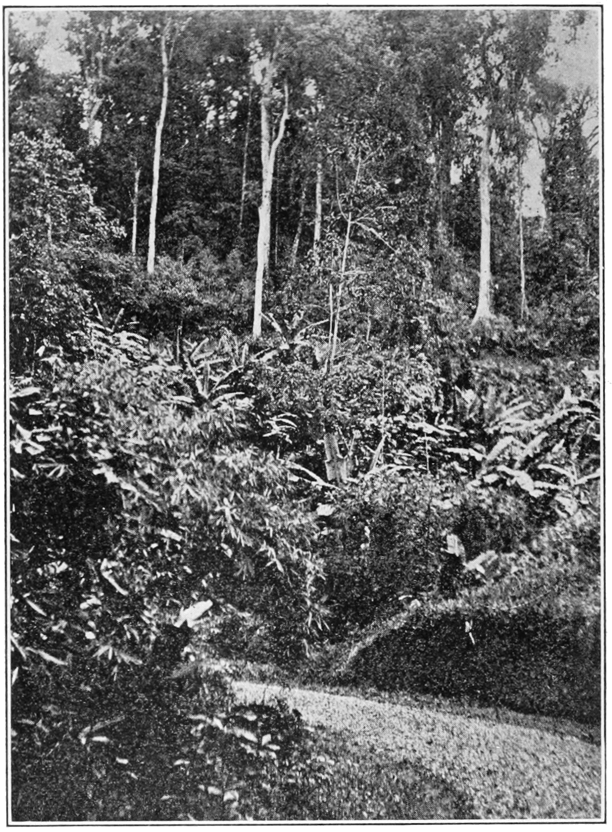 PSM V81 D040 High woods trinidad.png