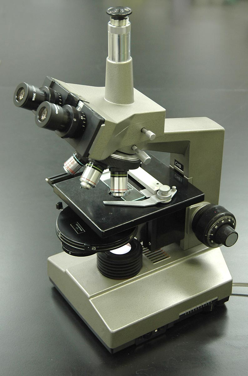 Phase-contrast microscopy - Wikipedia