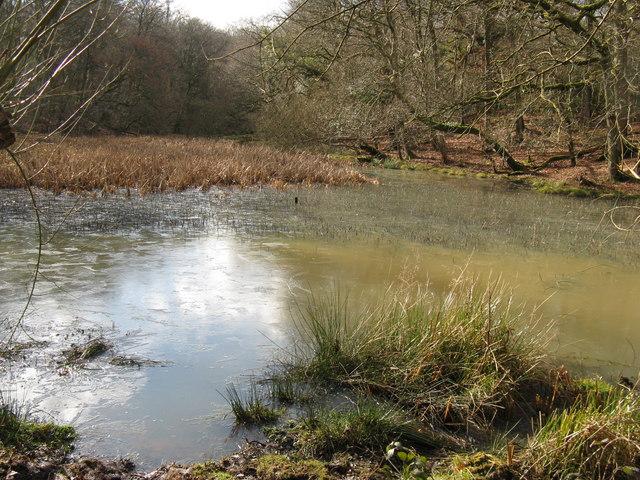Pond on Ebernoe Common - geograph.org.uk - 1162491