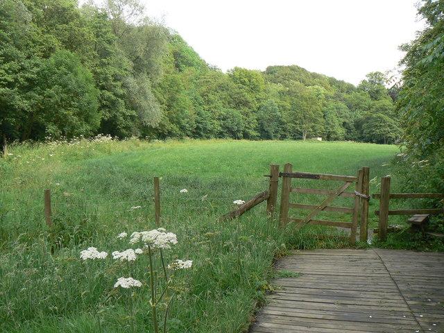 Riverside Meadow - geograph.org.uk - 481818