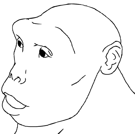 Dibujo del posible aspecto de Sahelanthropus tchadensis