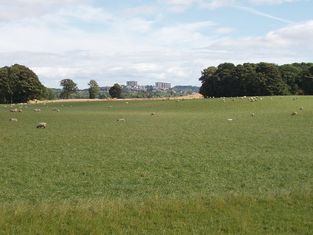 Sheep near Star Inn Farm, view to Dundee. View from minor road across fields to Dundee. The road is the boundary between Dundee City and Angus. See 21392 for a view from the nearby dual carriageway.
