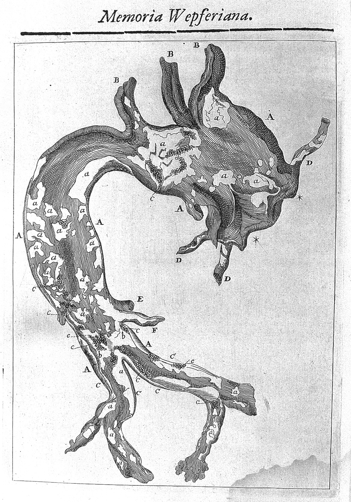FichierThe aorta; J.J. Wepfer, 40 Wellcome L40.jpg — Wikipédia