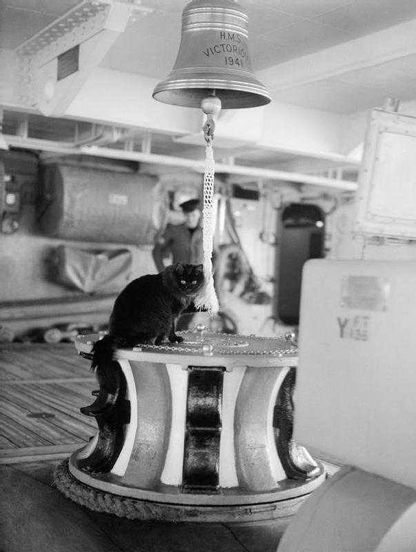 Tiddles, the ship's cat of HMS VICTORIOUS, at ...