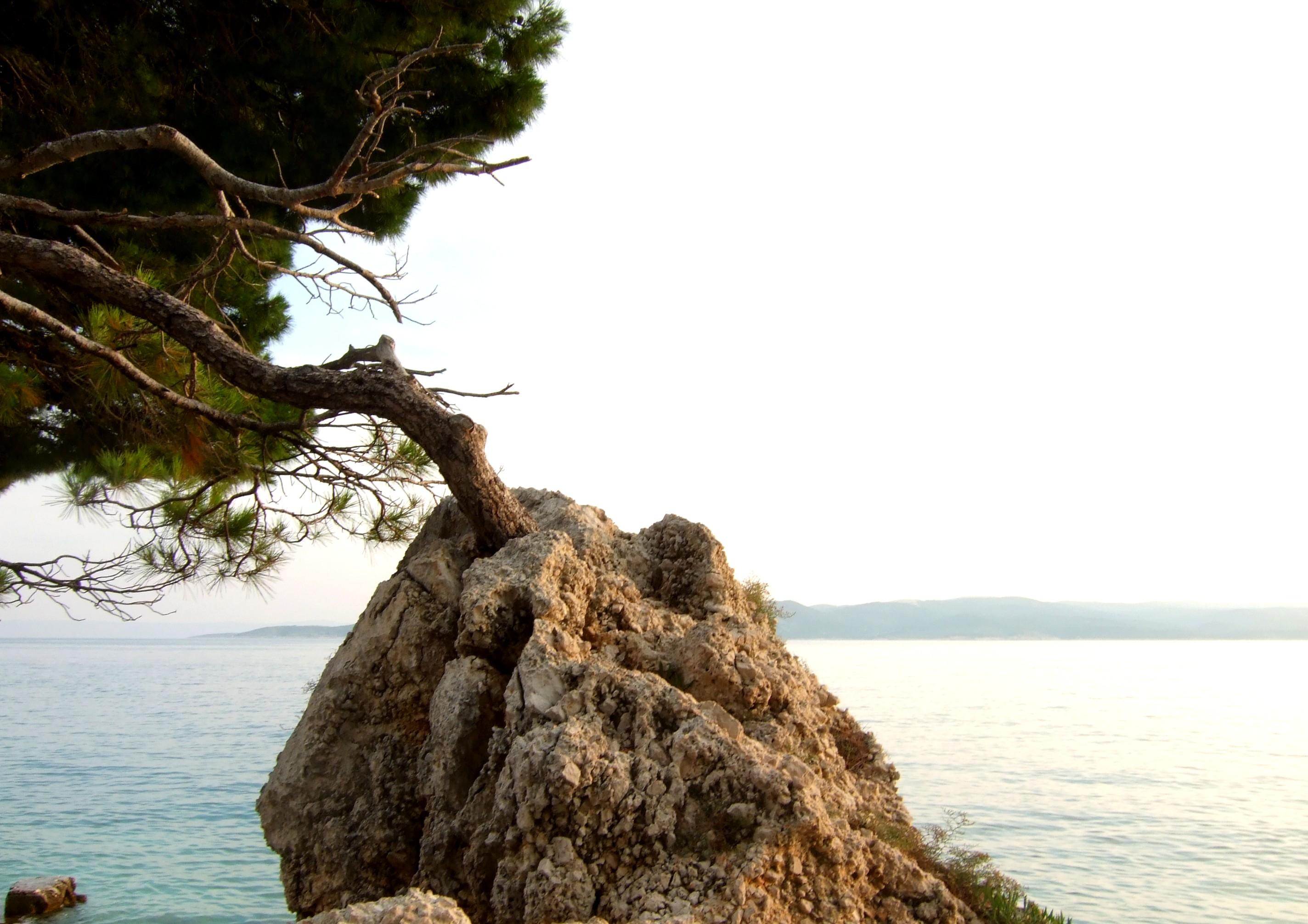 File:Tree on the rock.jpeg - Wikimedia Commons