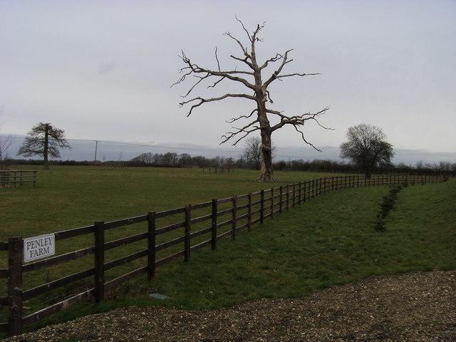 File:Tree still standing - geograph.org.uk - 964093.jpg
