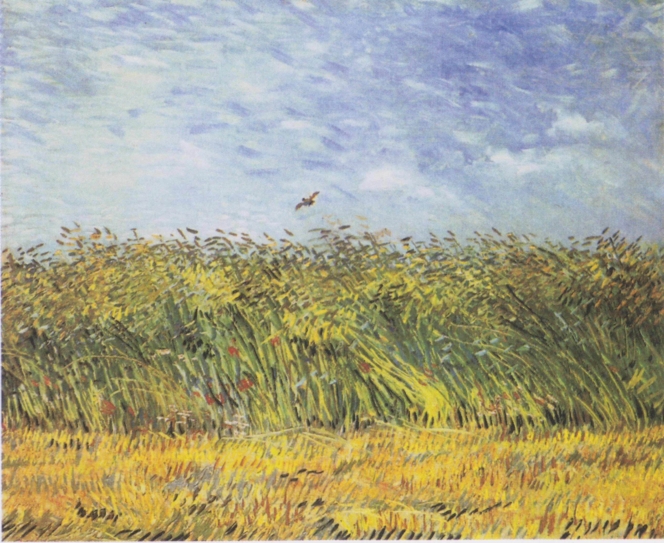 File Van Gogh Getreidefeld Mit Mohnblumen Und Lerche