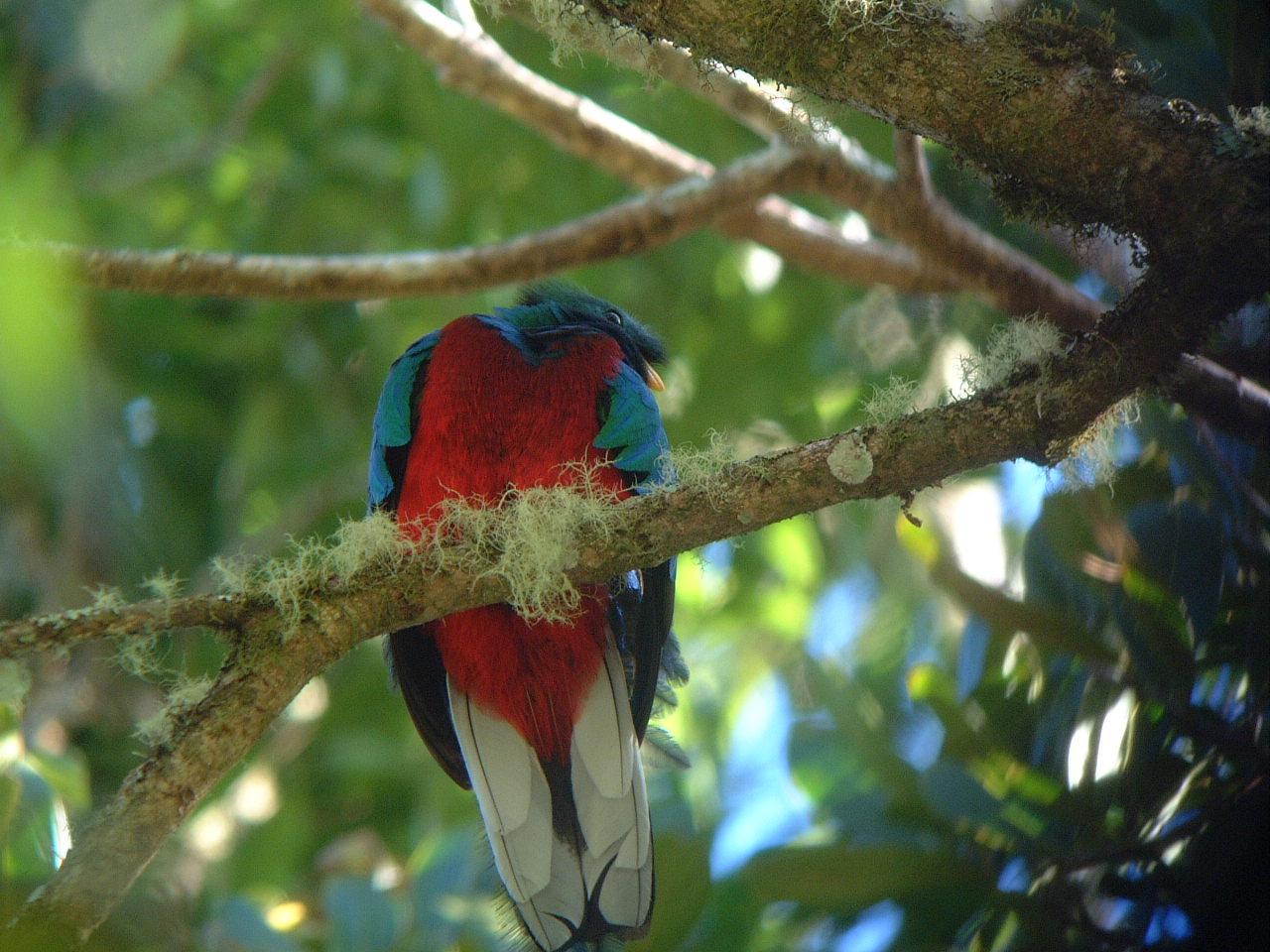 Quetzal - JungleKey.fr Image
