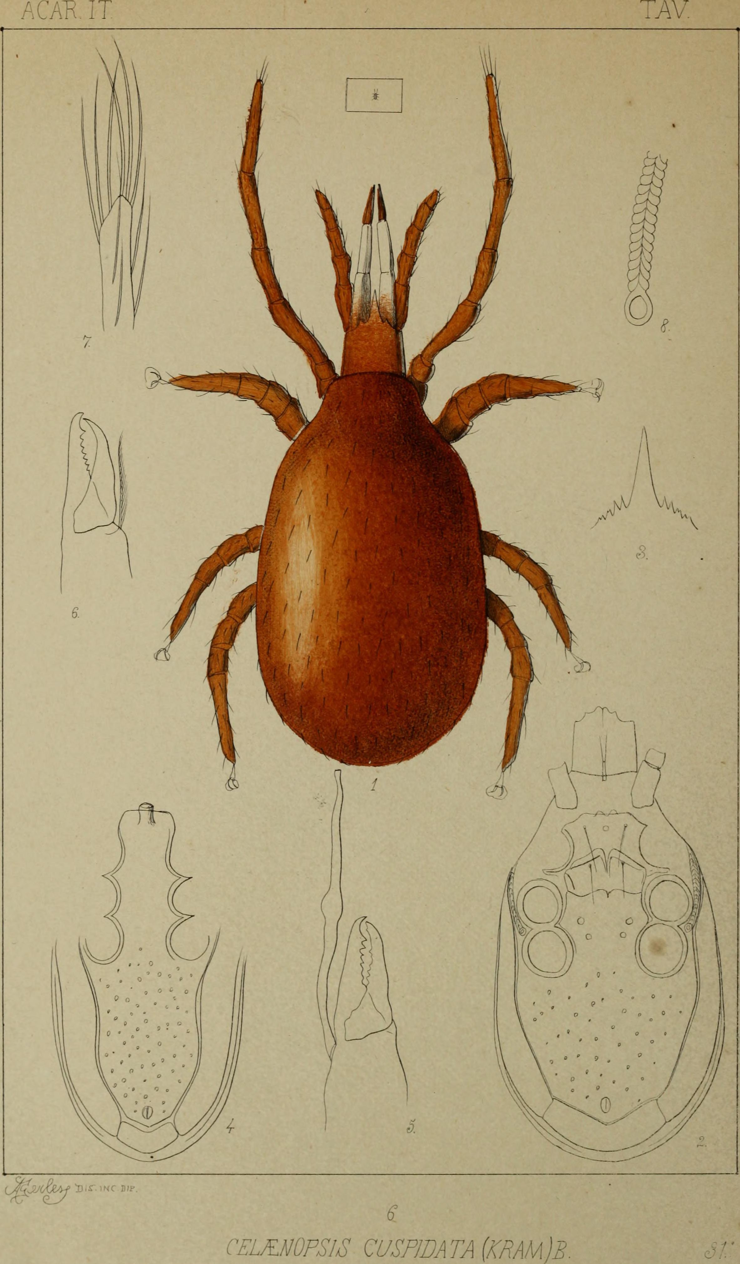 file acari myriopoda et scorpiones hucusque in italia reperta 1886