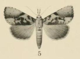 <i>Meliaba</i> Genus of moths