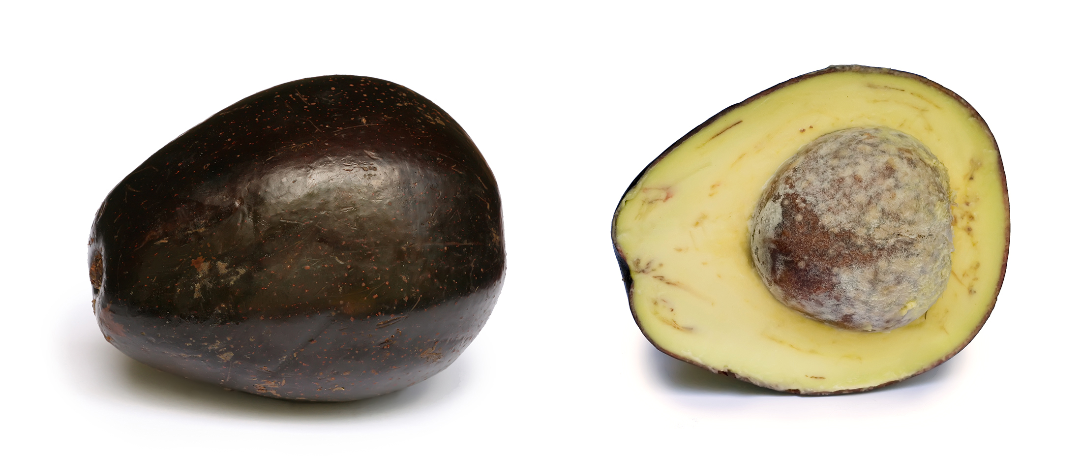 Persea americana fruit and cross-section showing seed