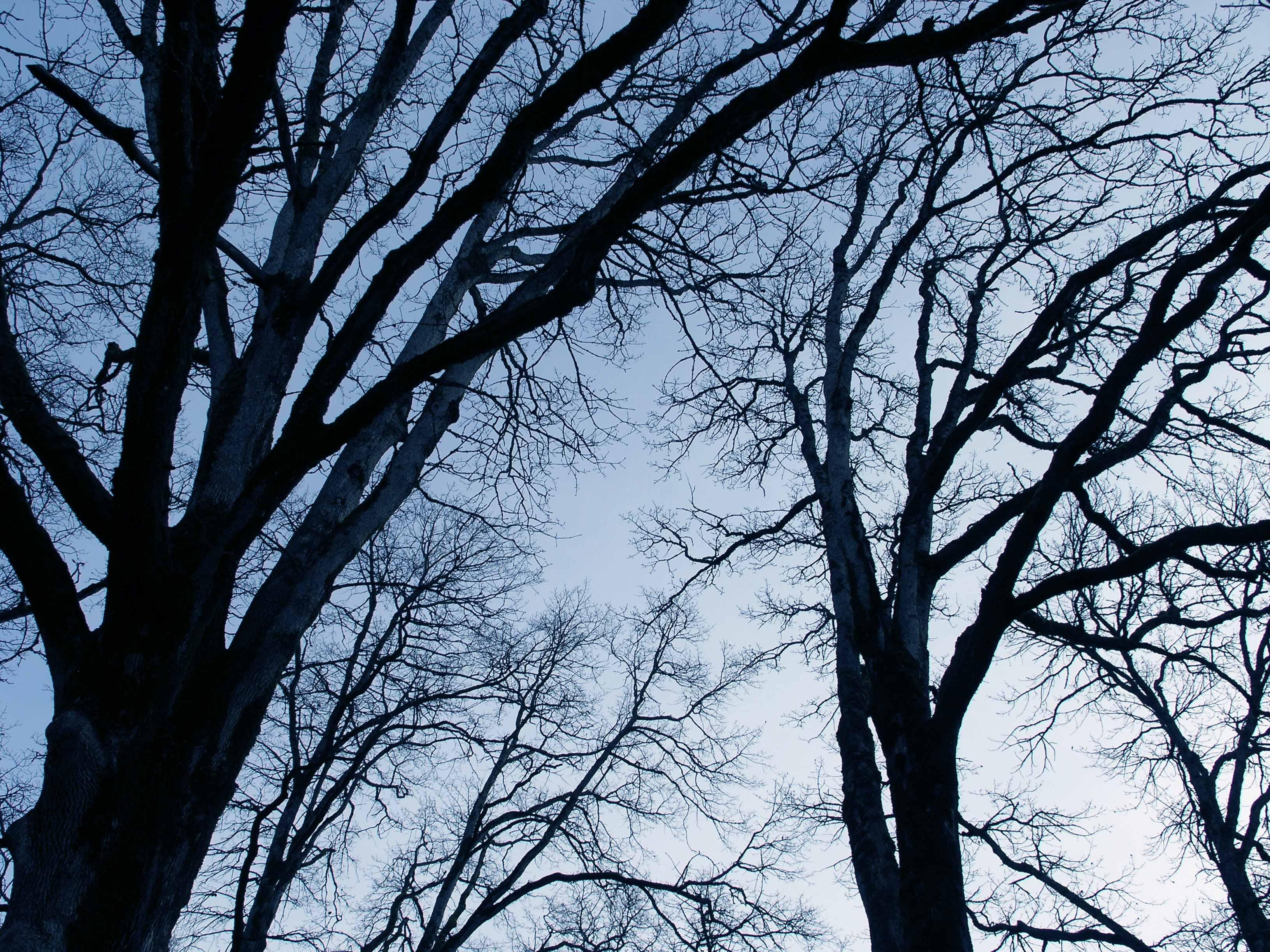 file bare trees 2 jpg