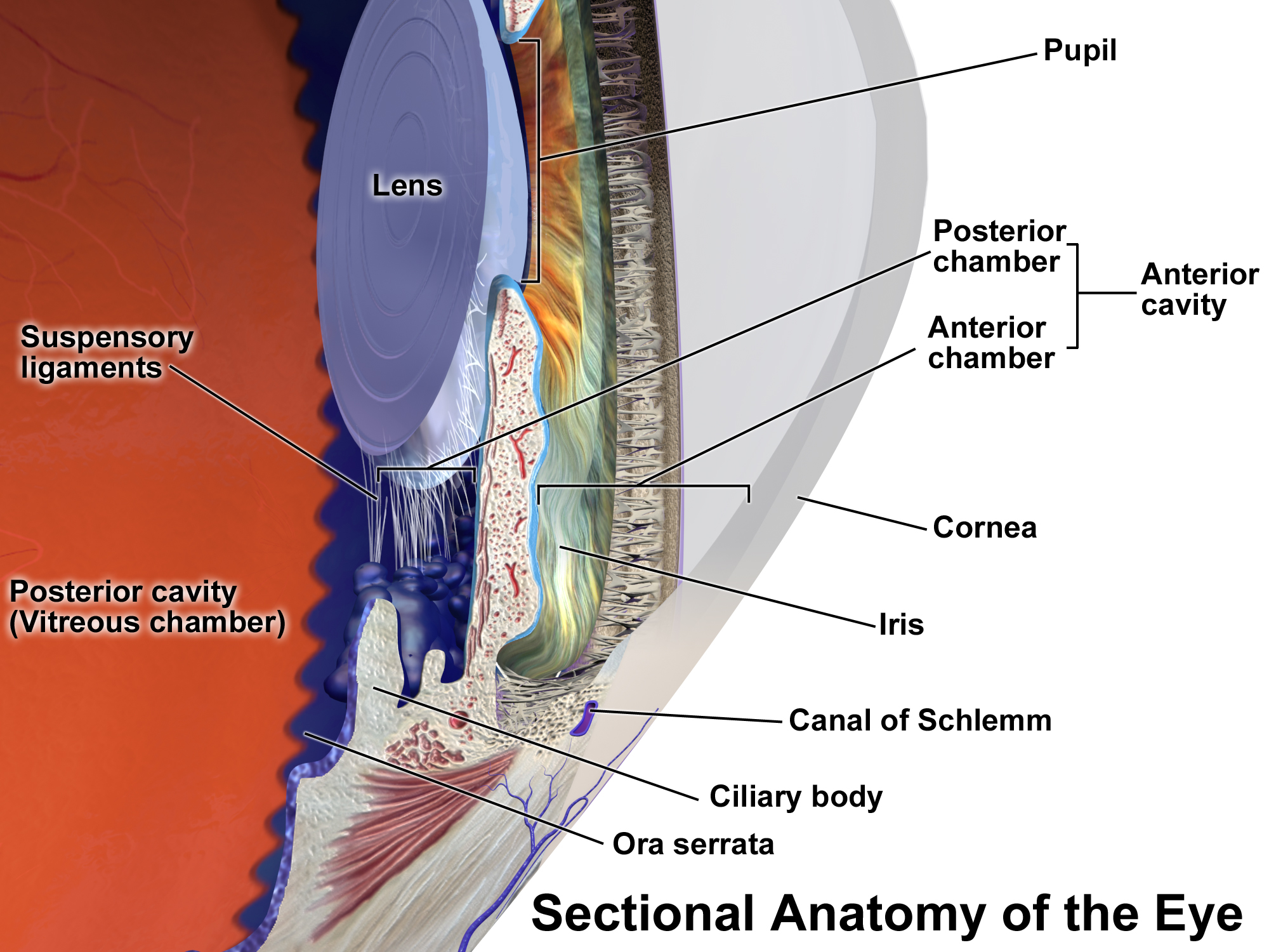 anterior chamber of eyeball wikipedia
