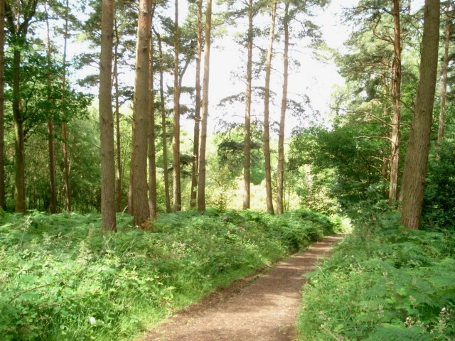 Chaddesley Wood - geograph.org.uk - 472031