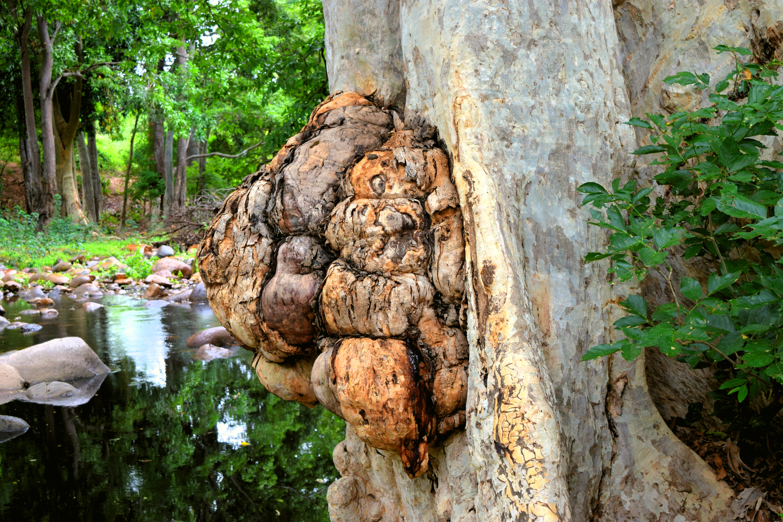 പ്രമാണം:Chinnar Wildlife Sanctuary DSC 5684 jpg