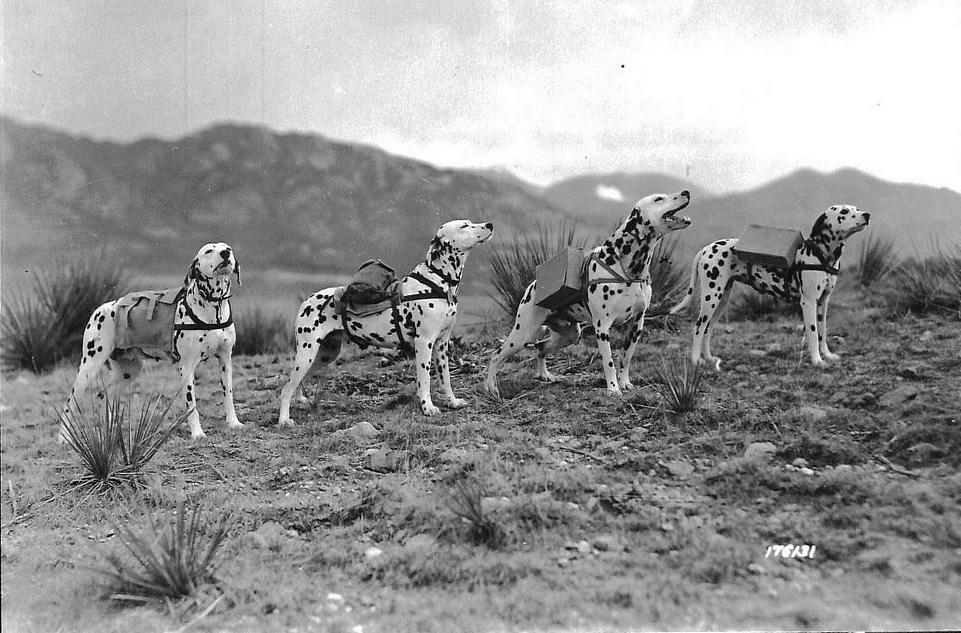 Картинки по запросу dog at war