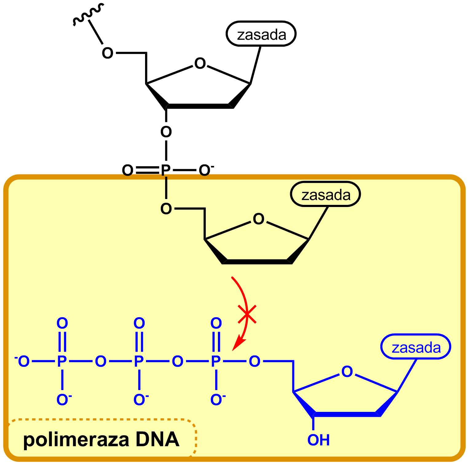 how to open dna files