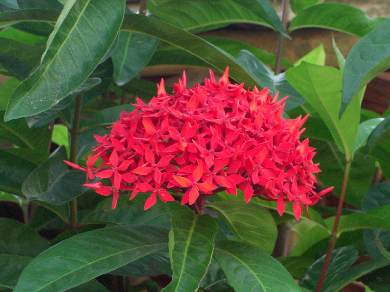 File Fleur Jardin Botanique Vietnam Jpg Wikimedia Commons