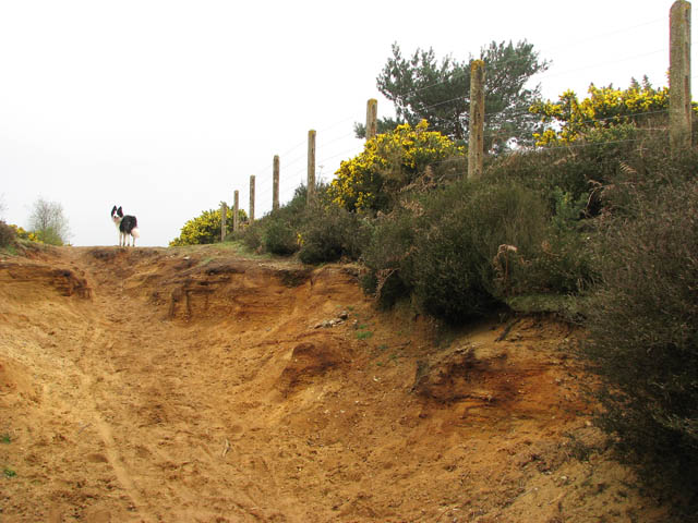 Following the fence - geograph.org.uk - 1249426