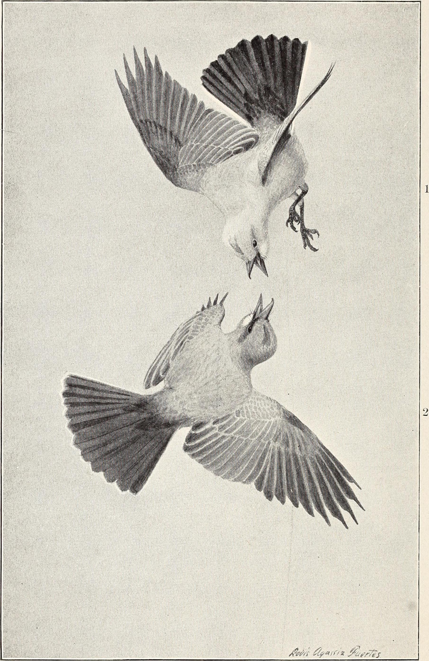 Rio birds of a fabulous feather