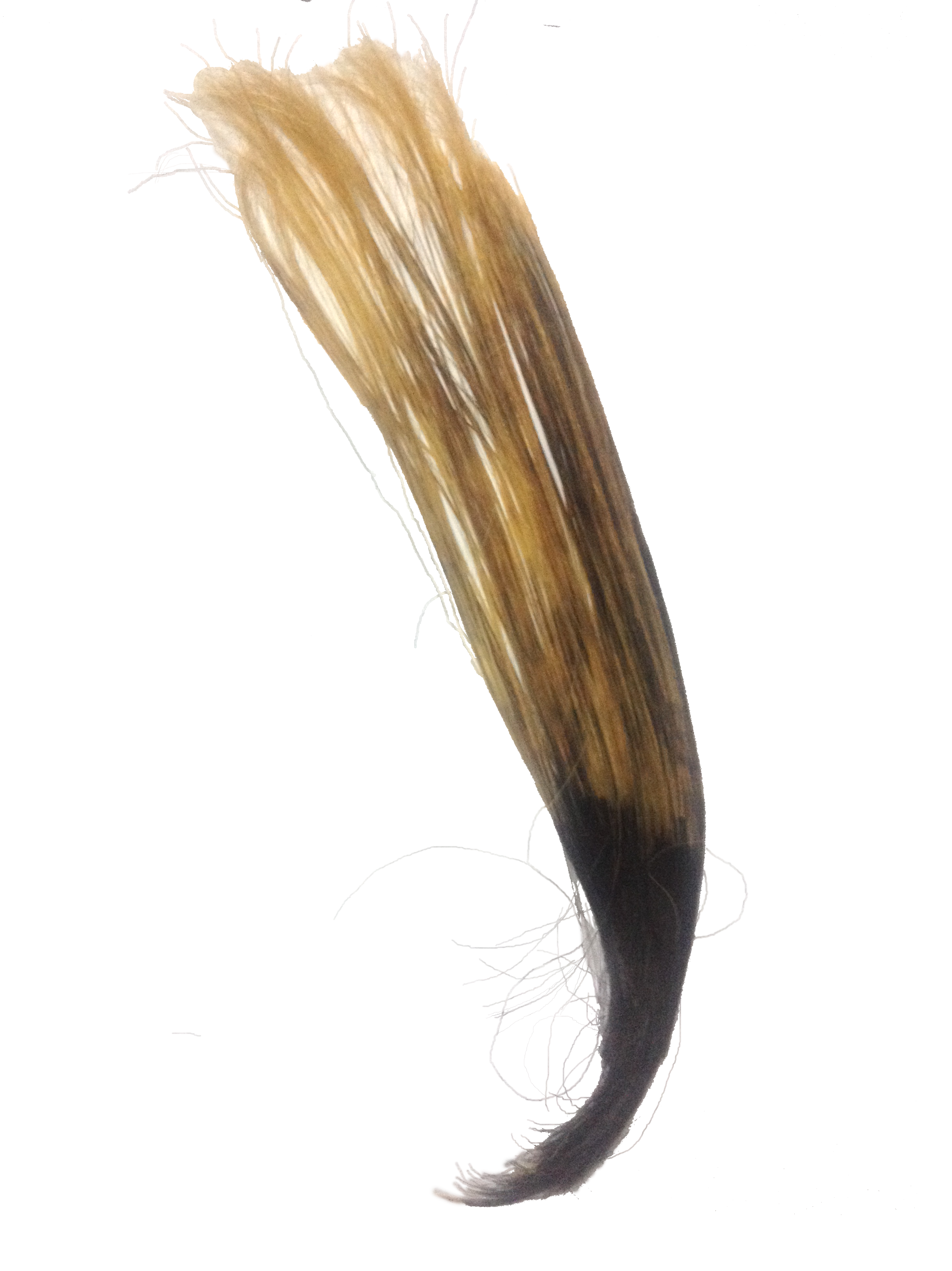 filehuman hair partly bleachedpng wikimedia commons