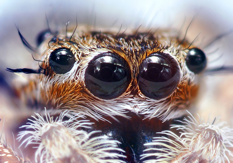 Spider Anatomy About Spiders Online Biology Dictionary
