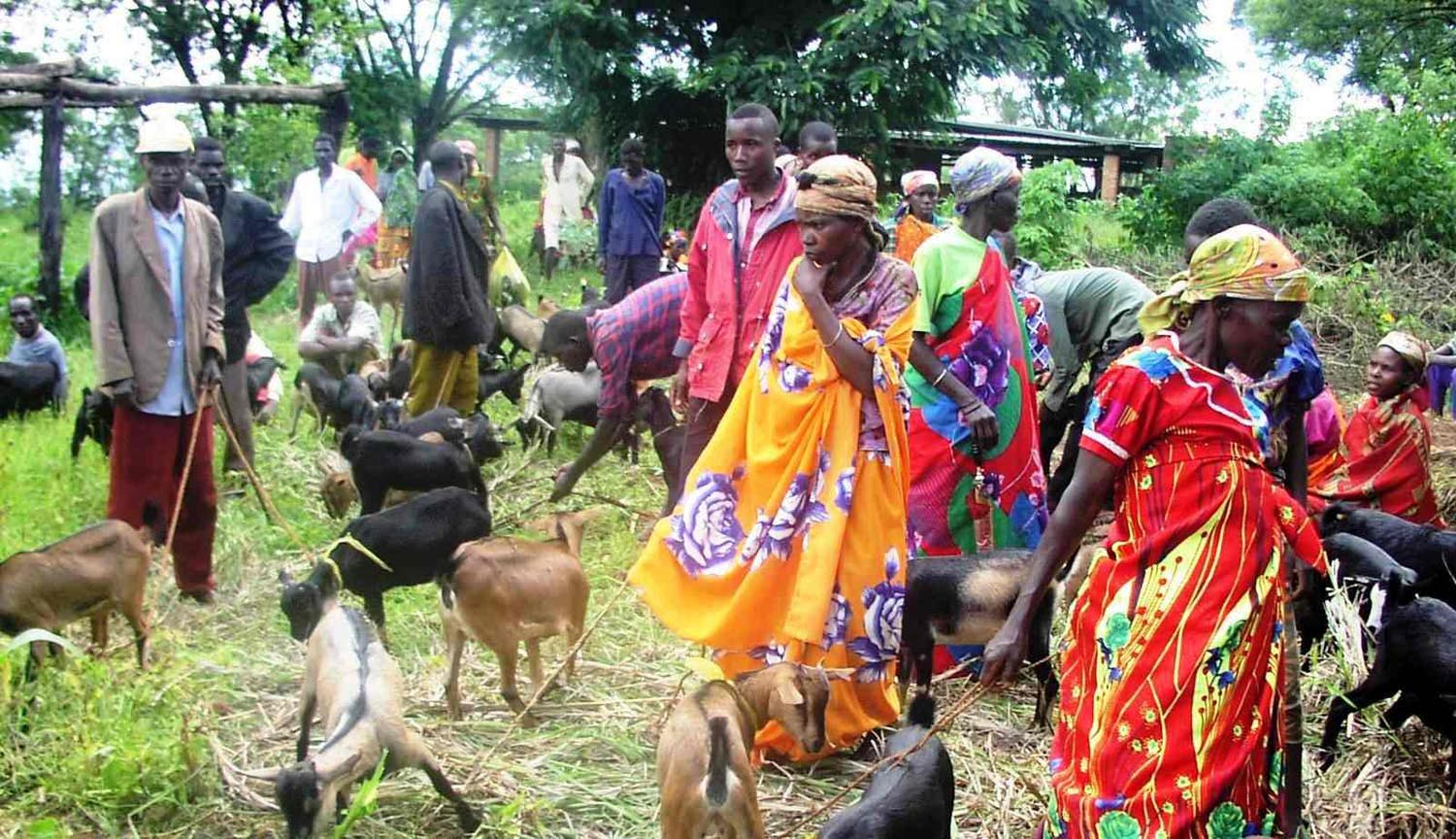 A group of Burundian women rearing goats
