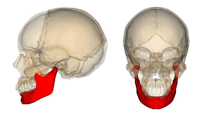 Ch 5 Bones Practical Flashcards By Jj Taylor Brainscape