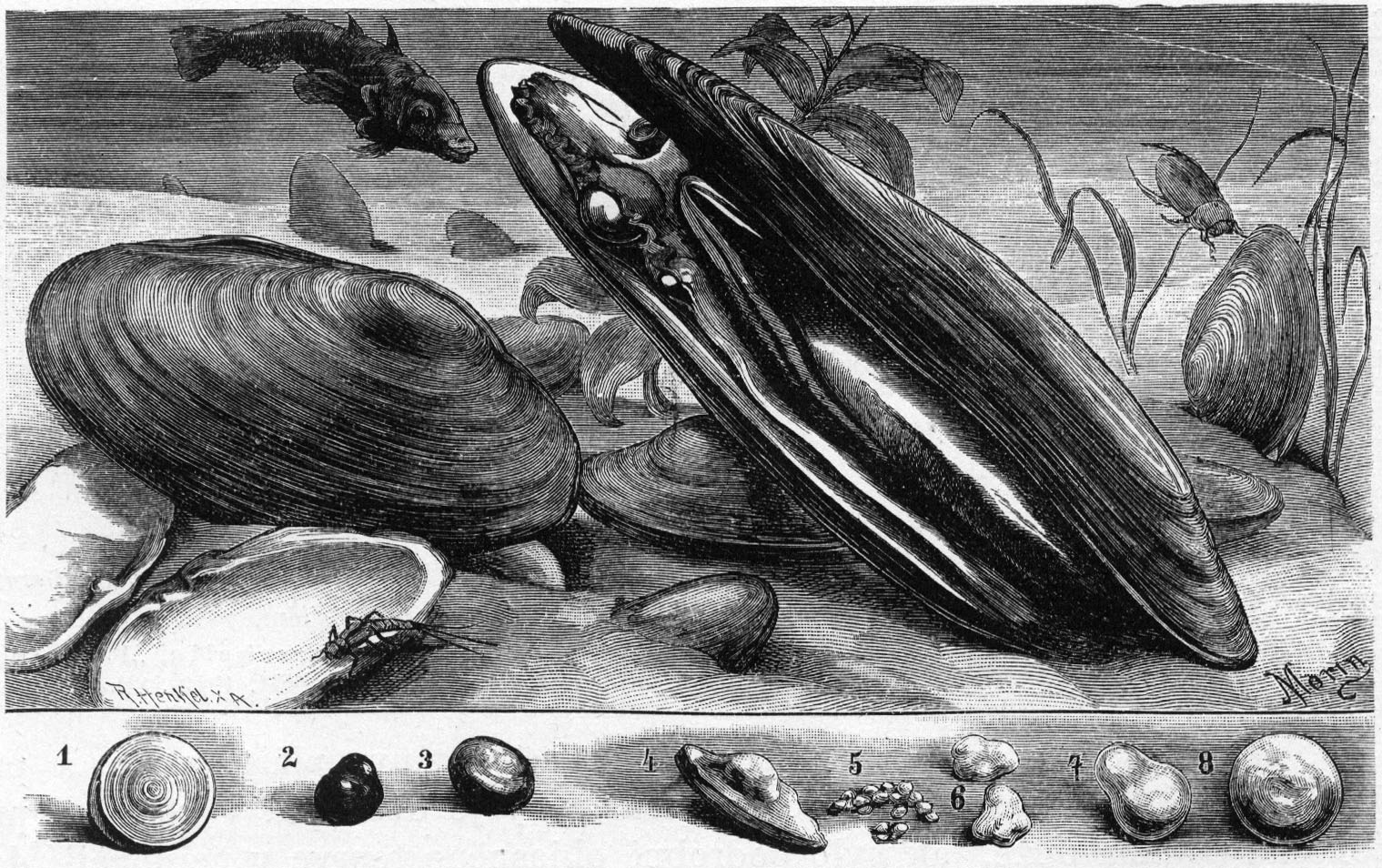 Abtauchen in benachbarte Gewässer nach Sachsen - gut geschmückt mit der vogtländischen Perle #perlenfischen