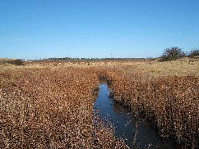 Marsh Farm Country Park - geograph.org.uk - 127976