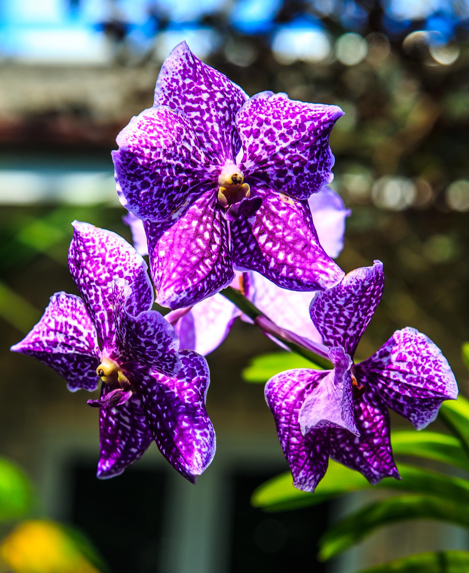 File:Miami   Fairchild Tropical Botanic Garden   In The Butterfly Garden  (12259858253)