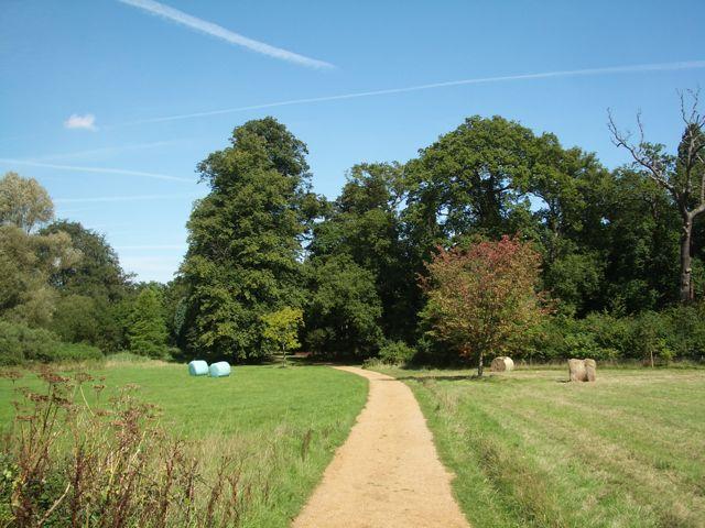 Nuneham Courteney Arboretum, track through grassland - geograph.org.uk - 1455550