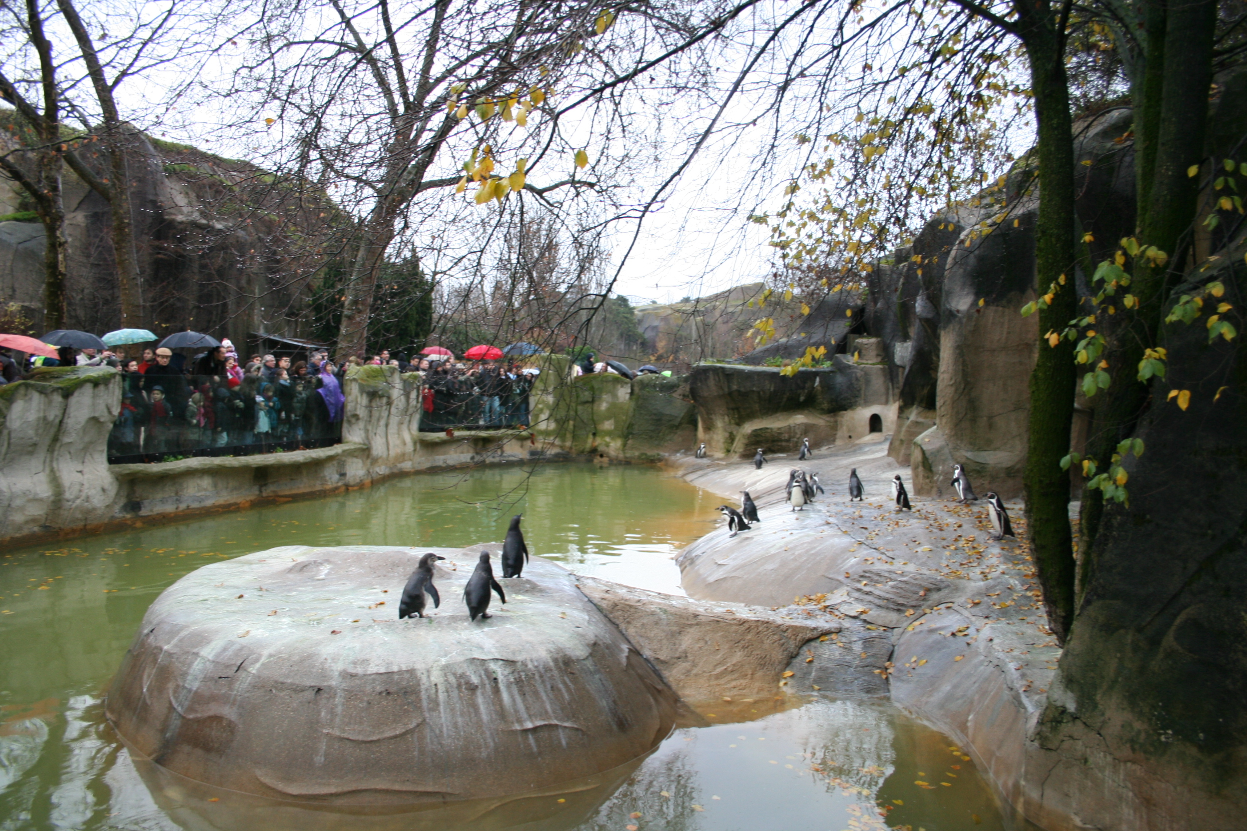 fichier penguins in the zoo of vincennes jpg wikip dia. Black Bedroom Furniture Sets. Home Design Ideas