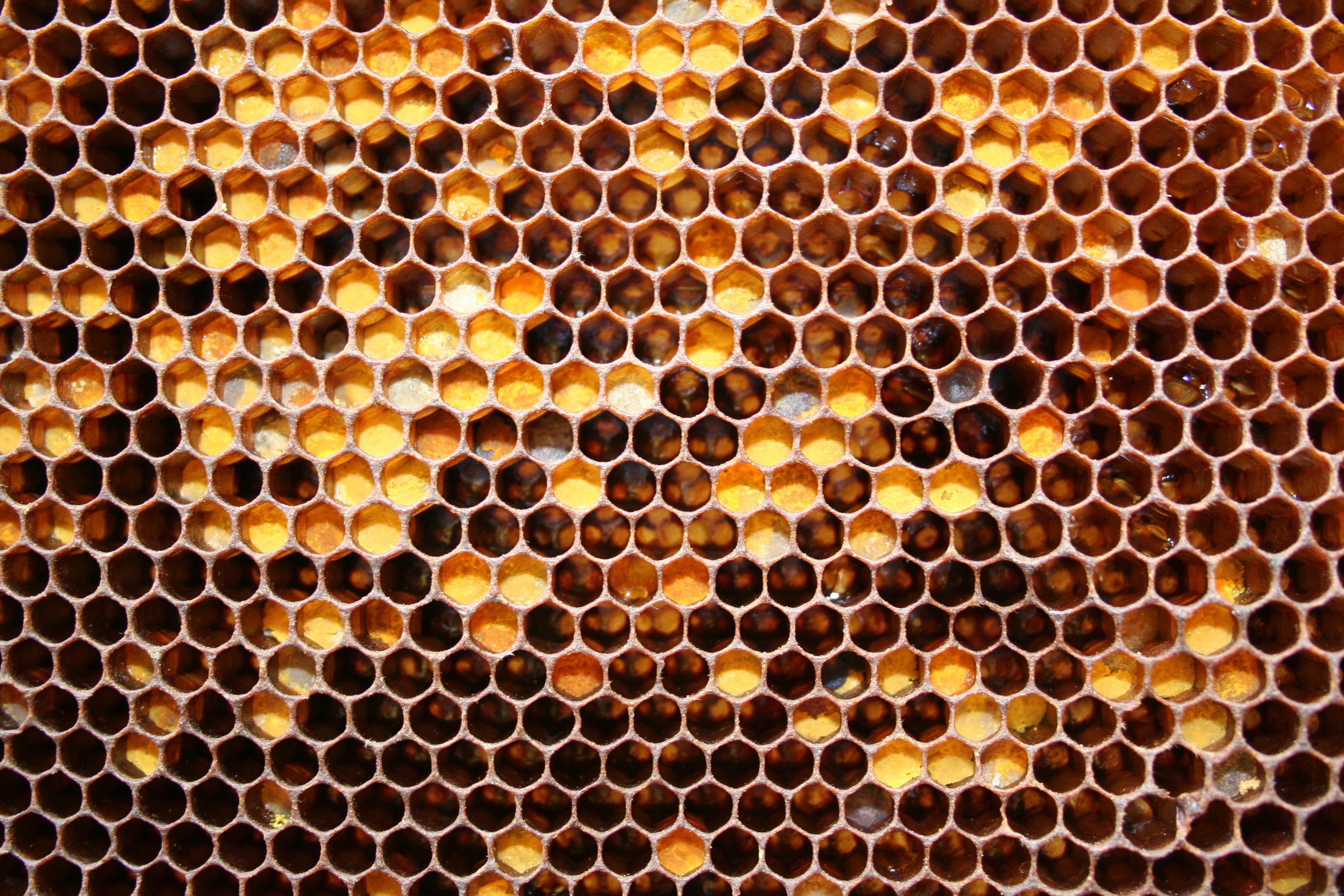Мёд в сотах  № 604517 без смс
