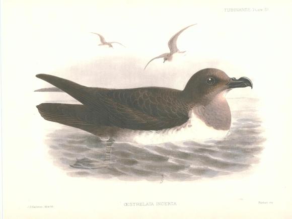 Atlantic petrel Quiz