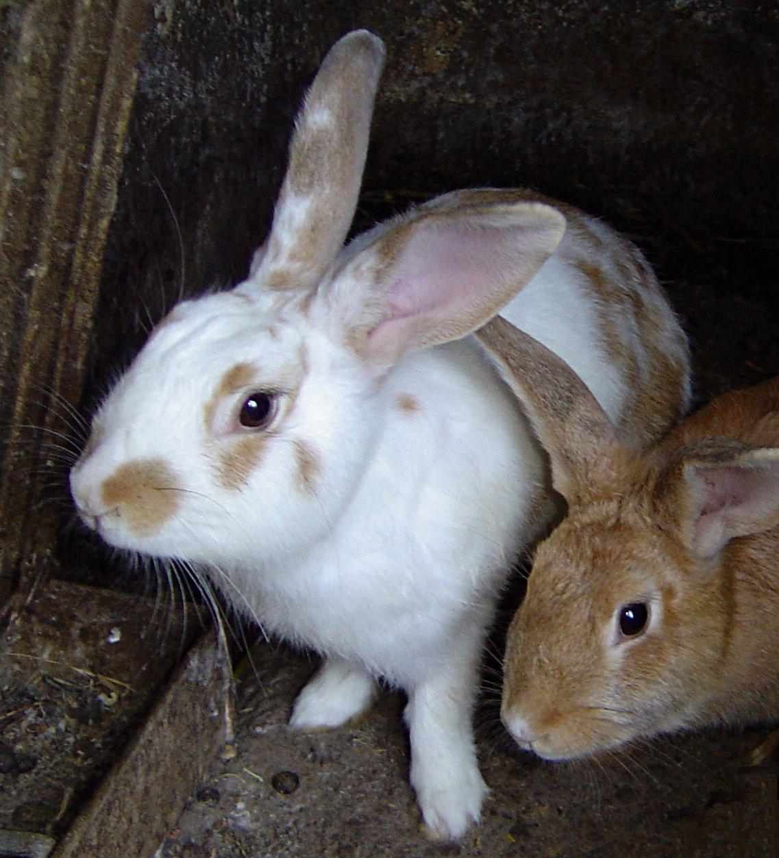 rabbits democratic underground