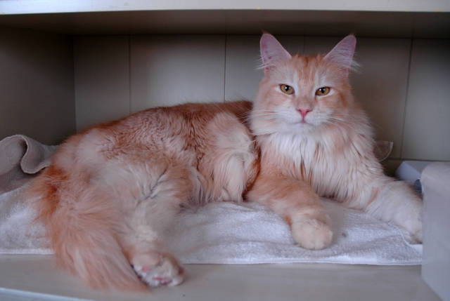 Cat Litter Wikipedia