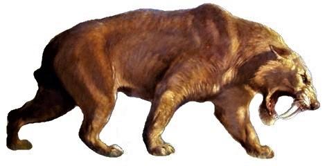 Smilodon extinto