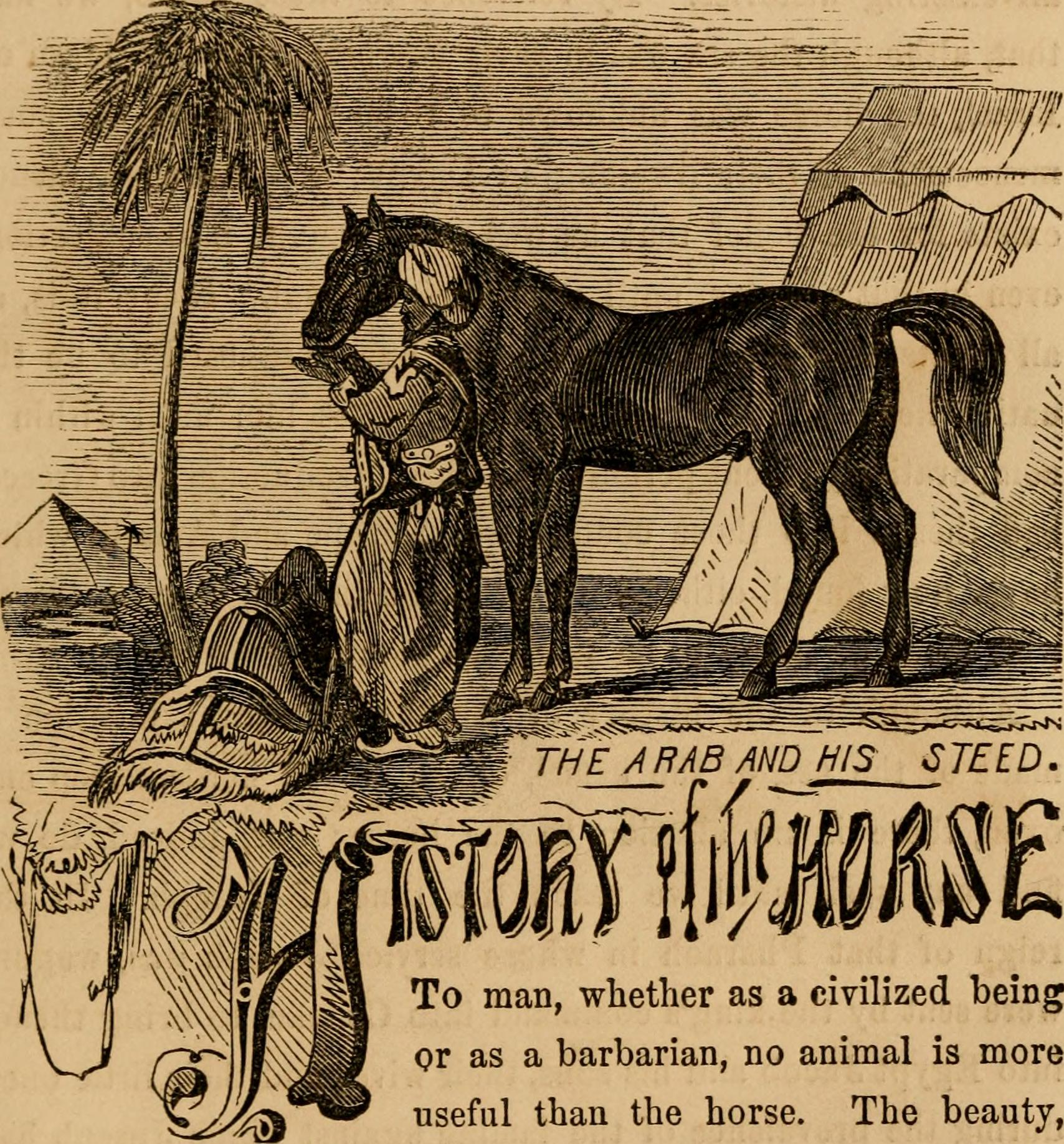 Filethe Horse And His Diseases Embracing His History And