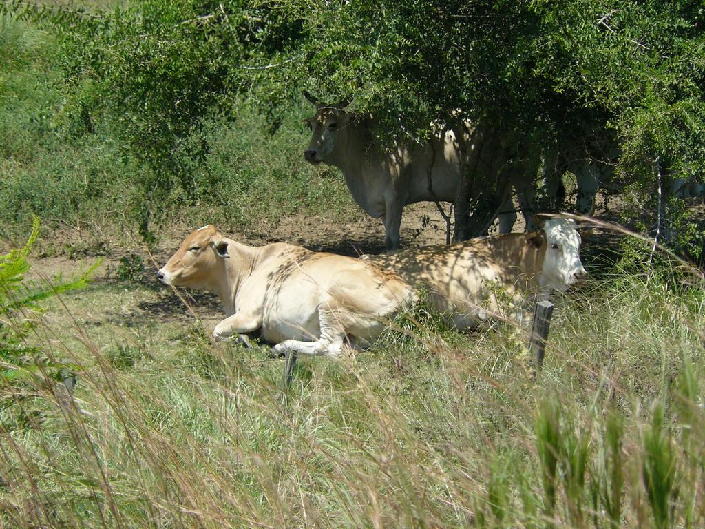 Vacas Y Caballos
