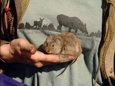 The average litter size of a Taiga vole is 8