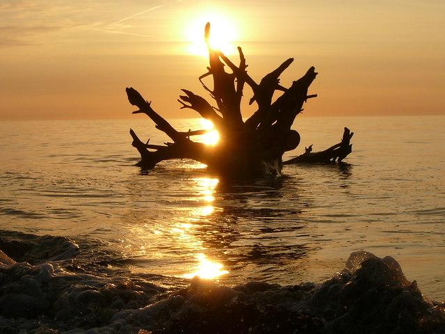 %27The_sea_monster%27_tree_trunk_%2C_Alnmouth_Beach_-_geograph.org.uk_-_1146571.jpg