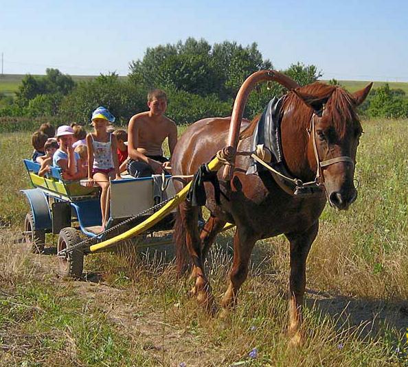 Сельский туризм Википедия