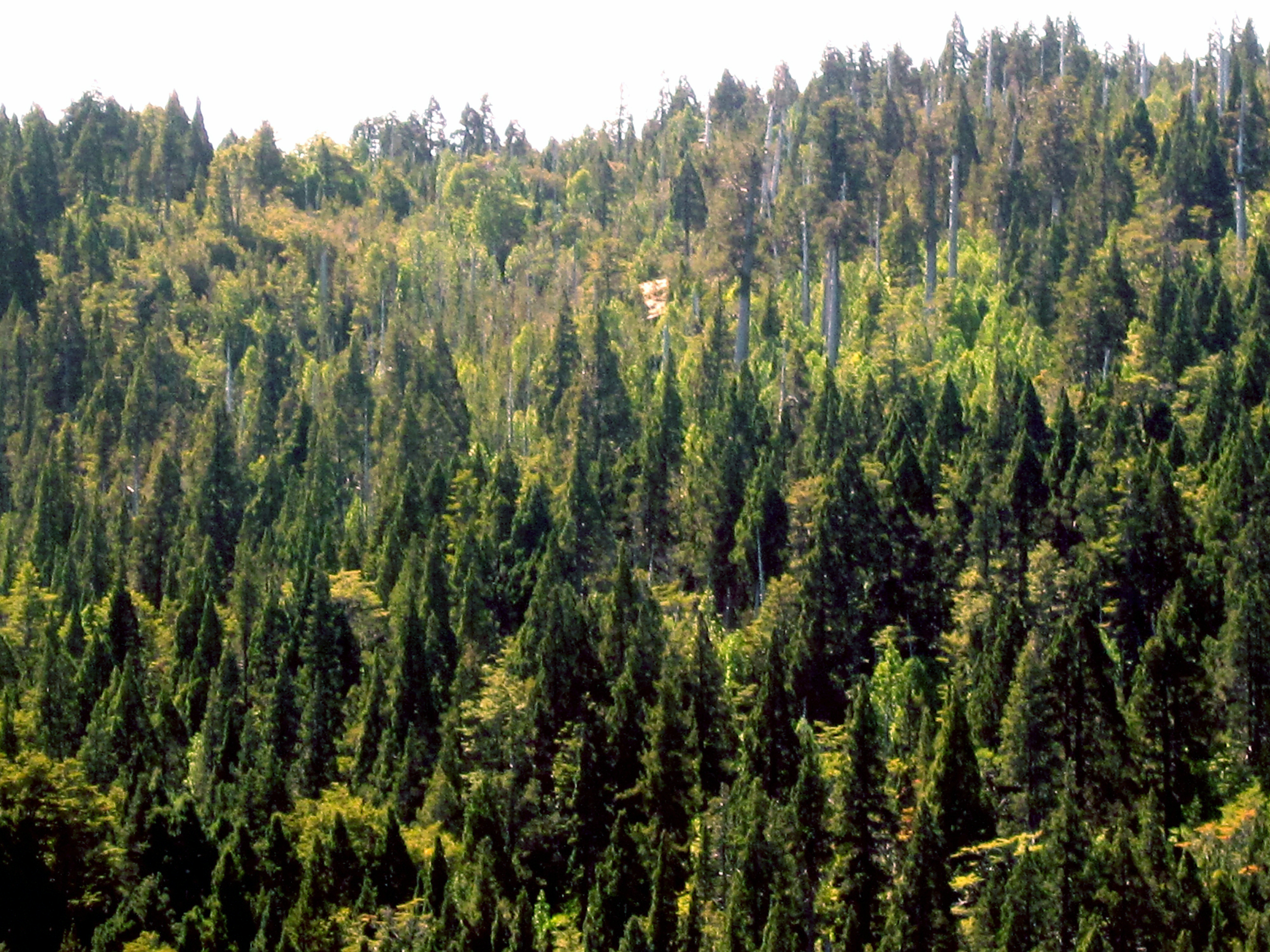 Taiga forest   Climate...