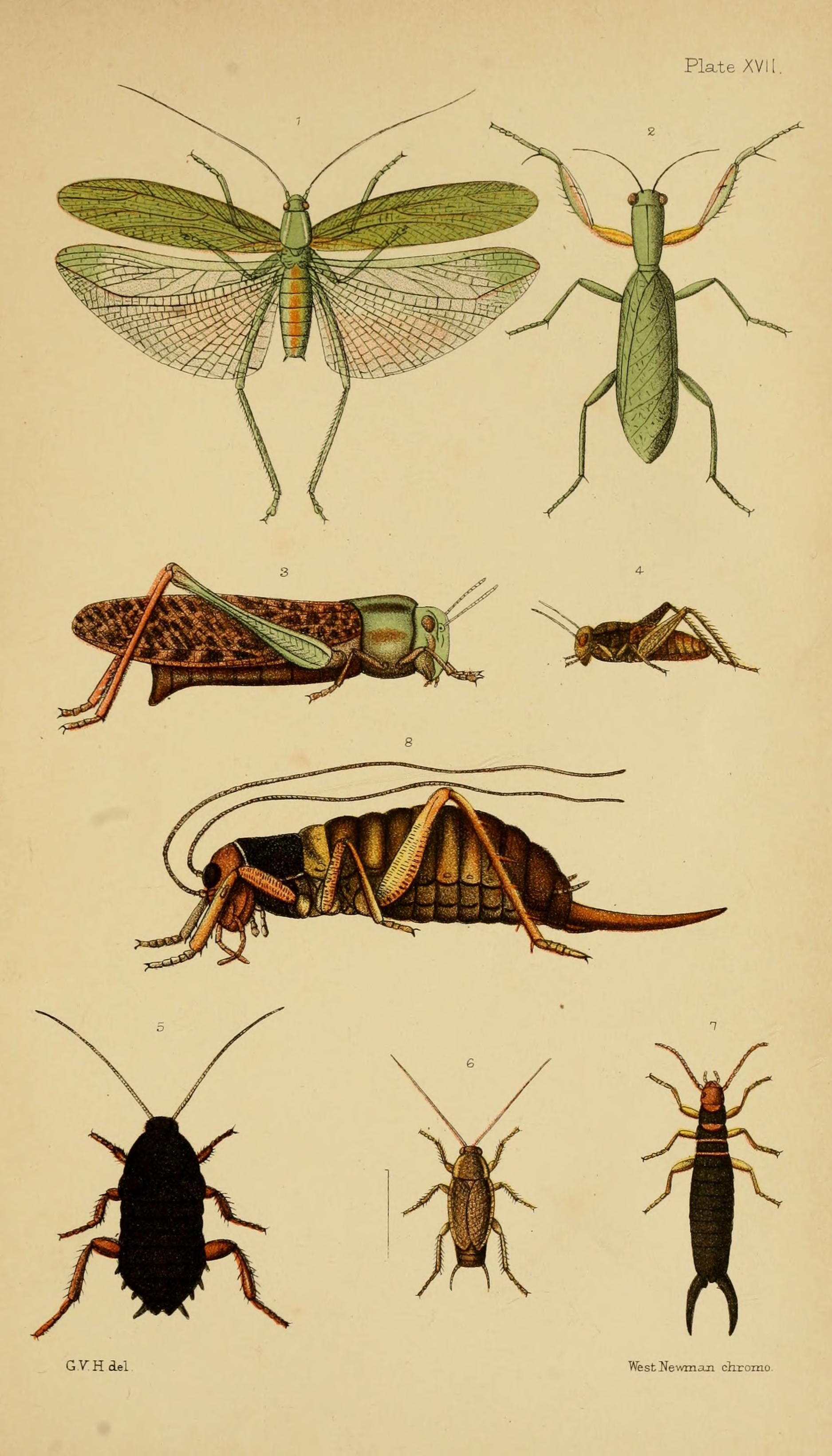 An analysis of the anatomy and classes of insects in entomology ...