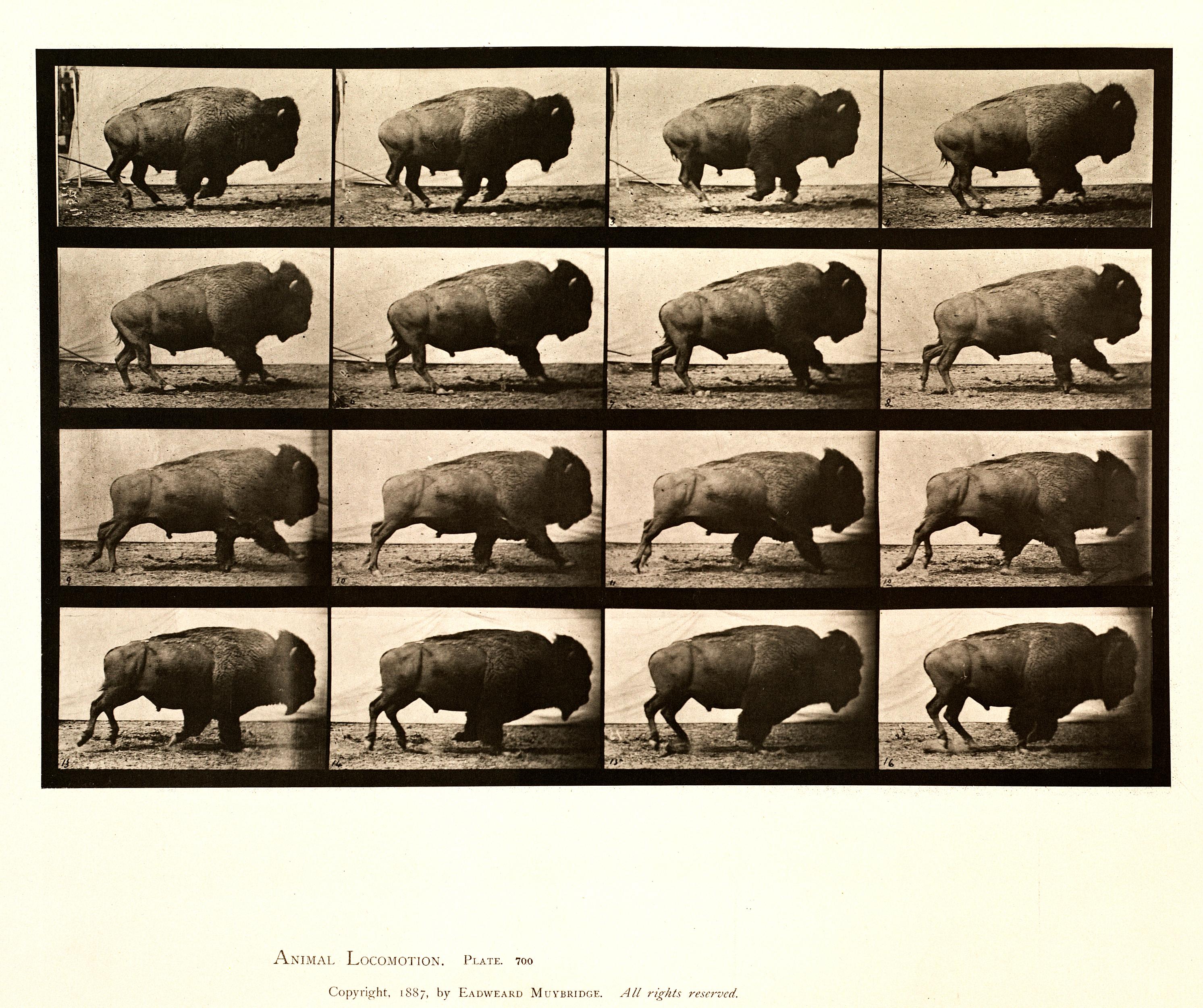 Gender Chart Of Animals: Animal locomotion. Plate 700 (Boston Public Library).jpg ,Chart