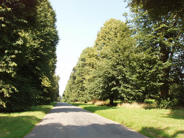File:Avenue of lime trees at Turville Heath - geograph.org.uk - 39077.jpg