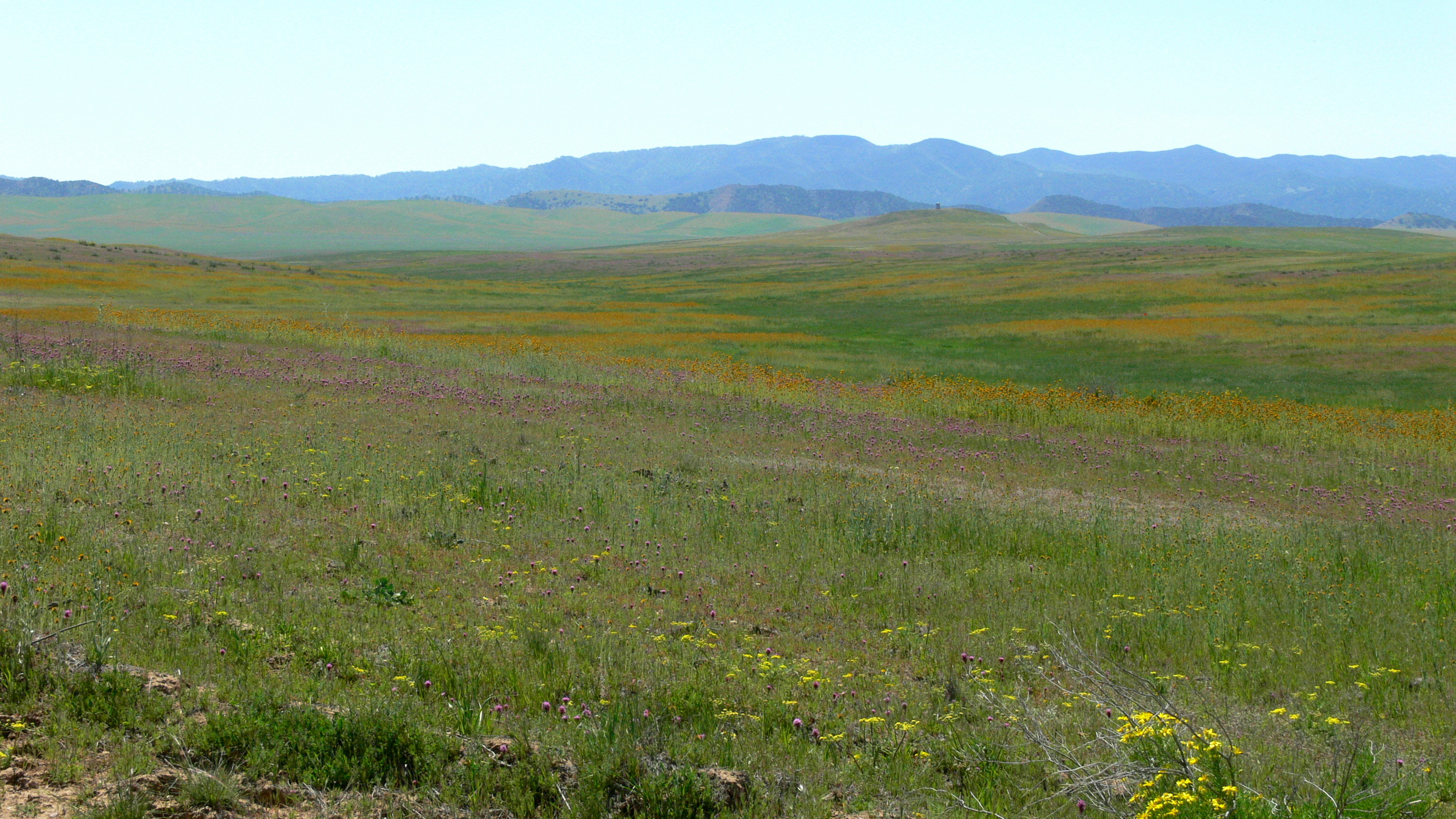 Description Carrizo plains, landscape with colorful wildflowers.jpg