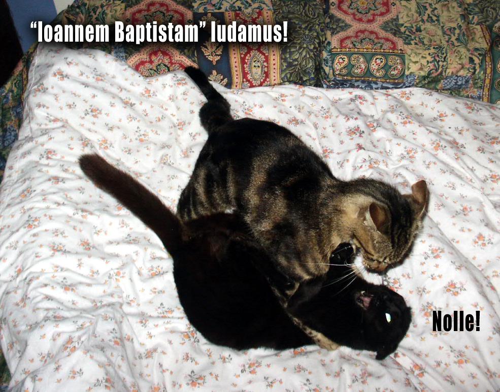 Latin Cats 22