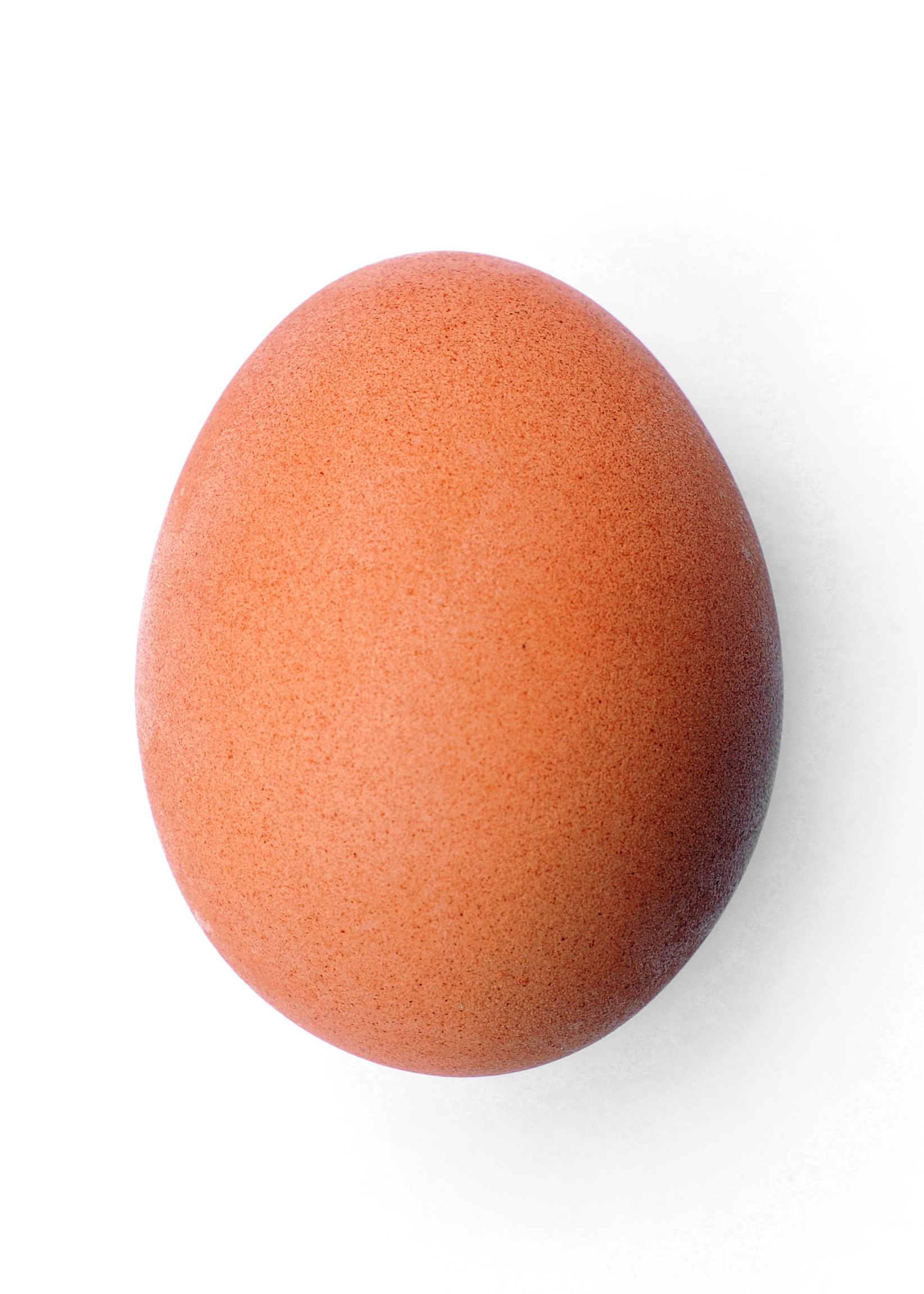 http://upload.wikimedia.org/wikipedia/commons/5/5e/Chicken_egg_2009-06-04.jpg